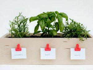 Ящик для растений, саженцев
