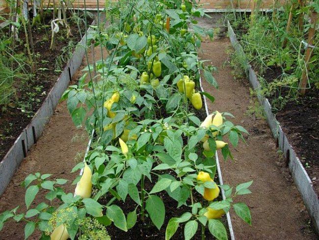 Автоматический полив овощей
