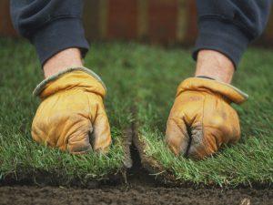 Как самому обустроить газон