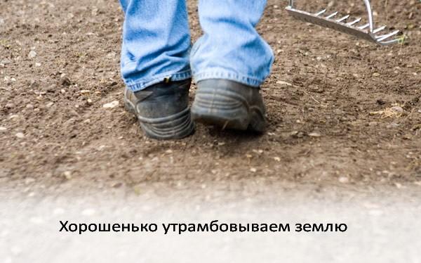 Как посадить газон фото