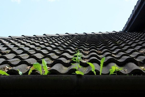Мусор на крыше