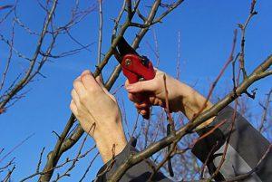 Садовые работы весной: четкий перечень на каждый месяц