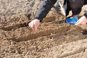 Пора браться за лопату: Что можно посадить в марте в открытый грунт и что можно высеять