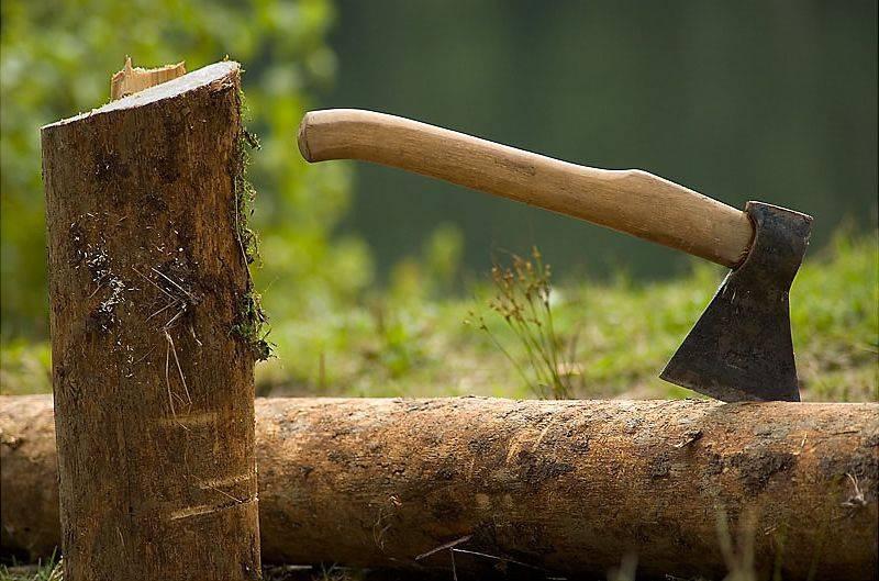 Чтобы не нарваться на штраф, не занимайтесь самовольной рубкой деревьев