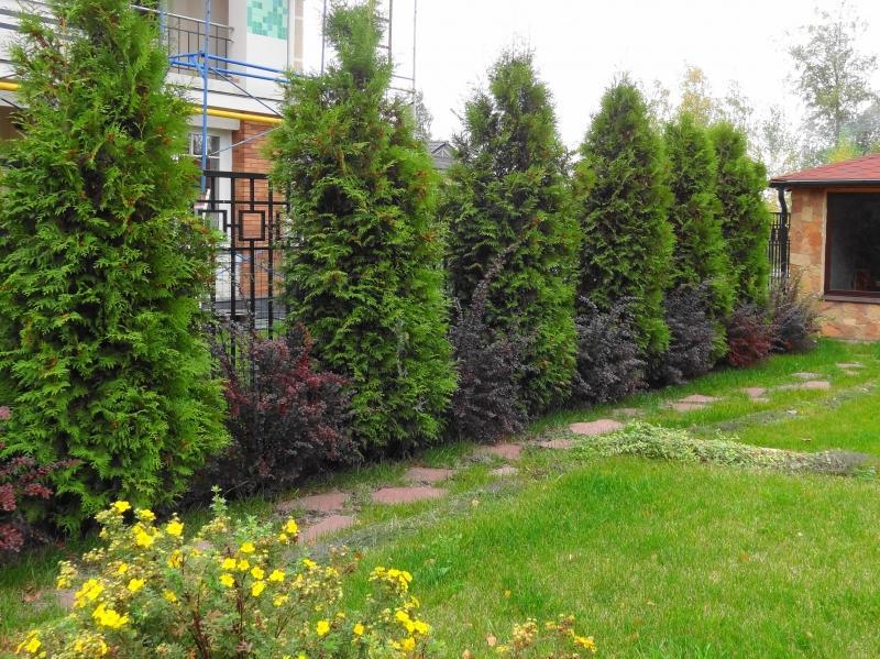 Деревья не должны затенять соседский участок