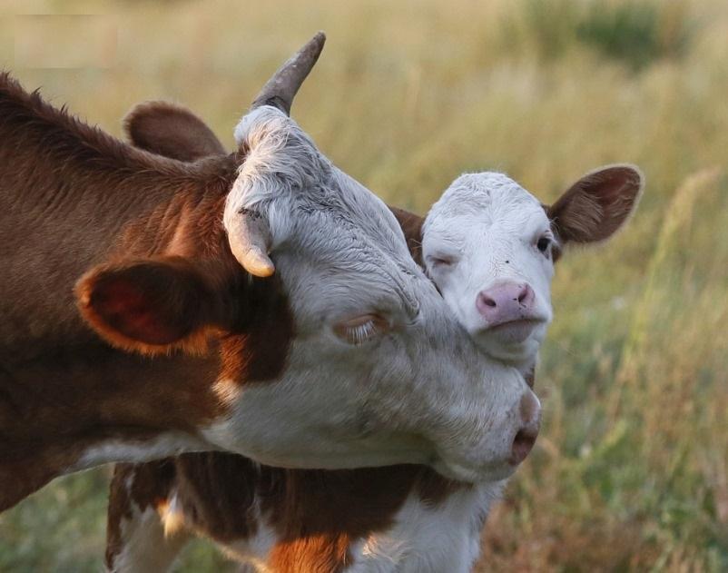Разводить животных запрещено