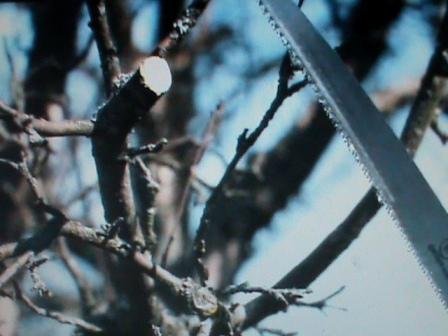 Прореживание ветвей