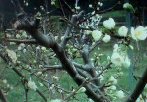 6 видов плодовых деревьев, которым нужна весенняя обрезка: сроки и виды обрезки