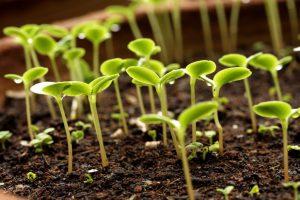 Дачный лайфхак: Как повысить всхожесть семян, не применяя покупной химии