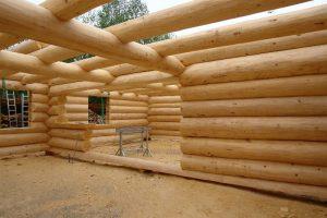 Ель vs Сосна: Какая древесина лучше для возведения дома?