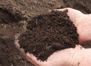 Эффективное средство, позволяющее обеспечить высокое плодородие почвы