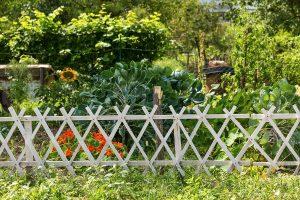 Какие требования законов следует знать, устанавливая забор на даче