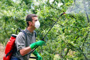 От чего может страдать яблоня в июле и как ее защитить