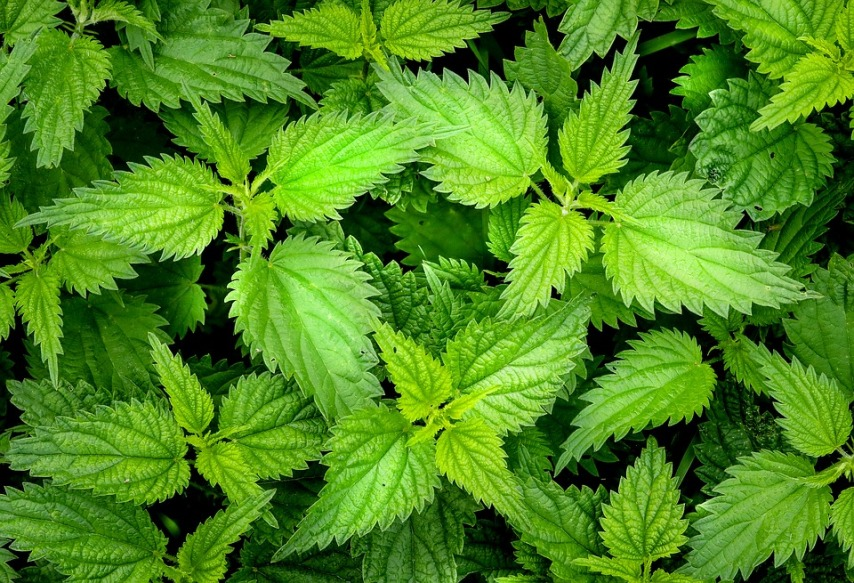 Сорные травы - избавиться навсегда возможно?