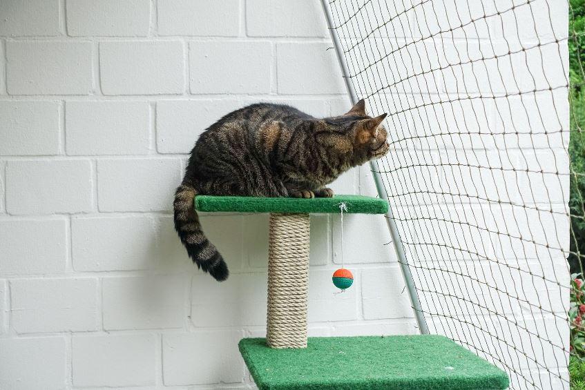 Маленький игровой комплекс для кошки
