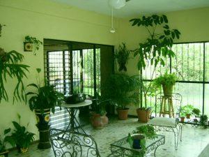 Растения для темной квартиры: выбор и уход