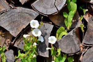 Уничтожить сорняки навсегда: методы и результаты