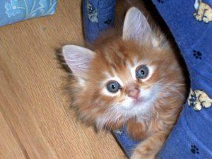 Как сделать игровой комплекс для своей кошки
