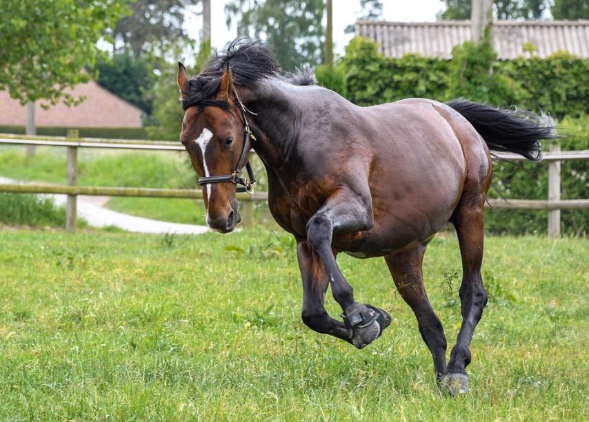 Выгул для полноценного моциона лшади