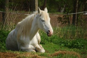 Выгул для лошади на частной конюшне
