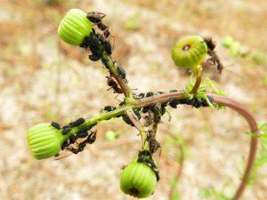 Избавиться на участке от муравьев: действенные и простые советы