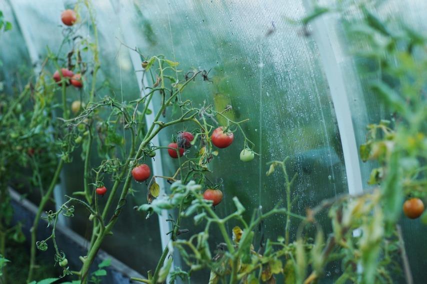 Виды материалов для укрытия садовых культур