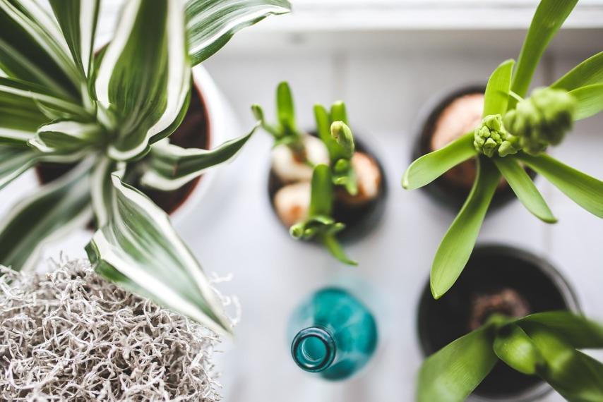 Советы по уходу за комнатными растениями