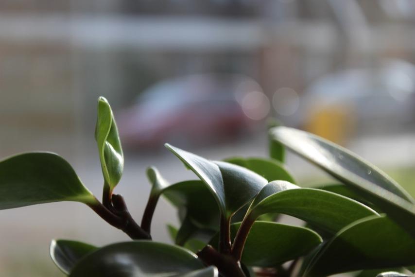 Опрыскивание листьев комнатных растений