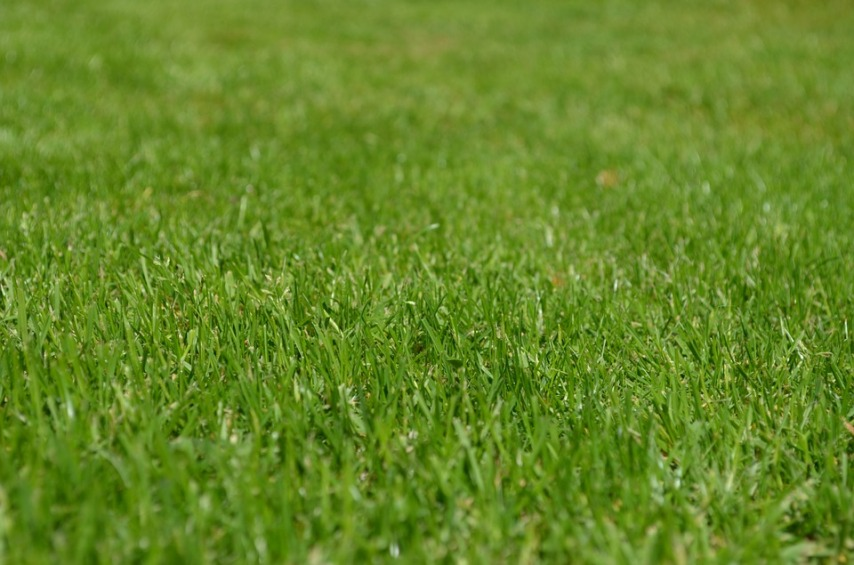 Рулонный газон на частном участке