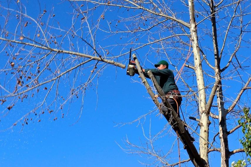 Как производится обрезка деревьев
