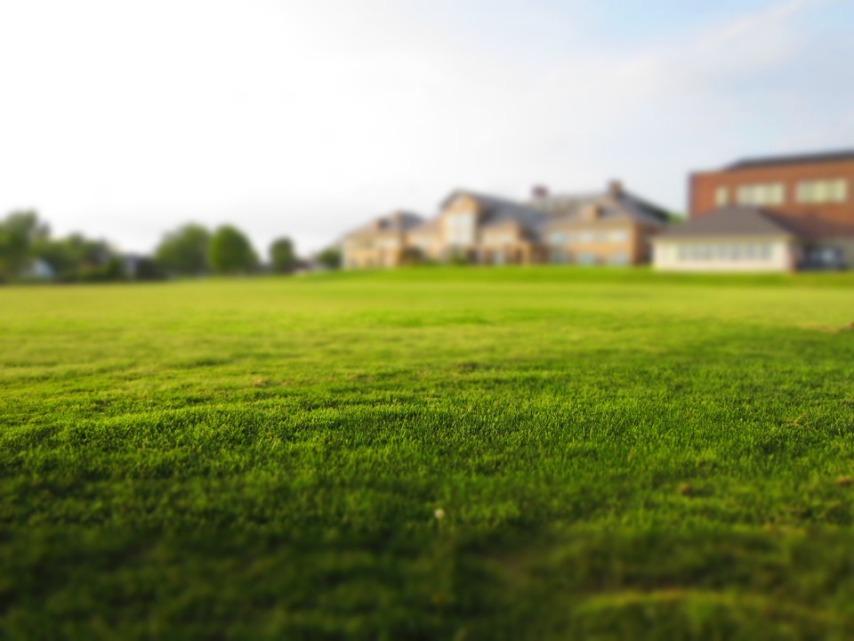 Основные советы по грамотному посеву газона