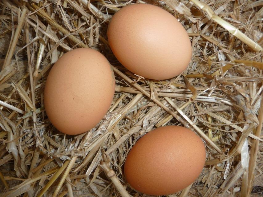 Получение домашних яиц