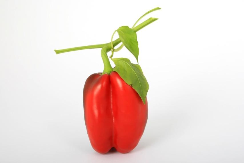 Получение плодов сладкого перца при выращивании его зимой на подоконнике