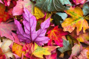 Опавшая листва: методы ее утилизации осенью