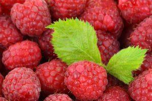 Как ограничить разрастание малины по участку