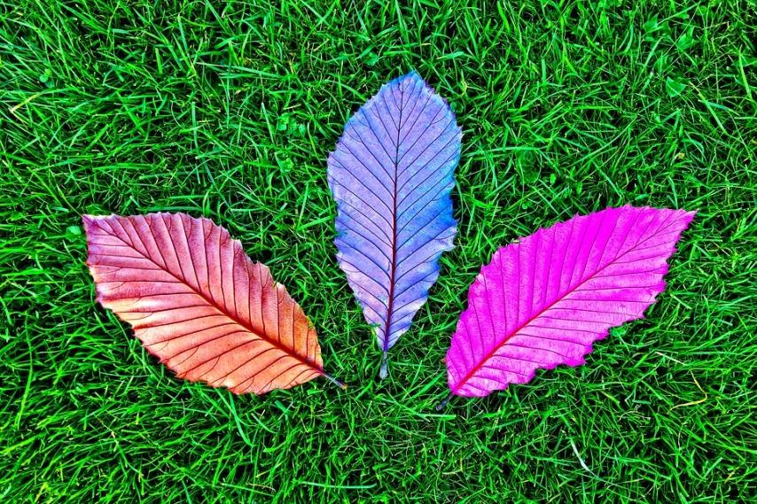 Опавшие листья: быстрые и эффективные методы утилизации