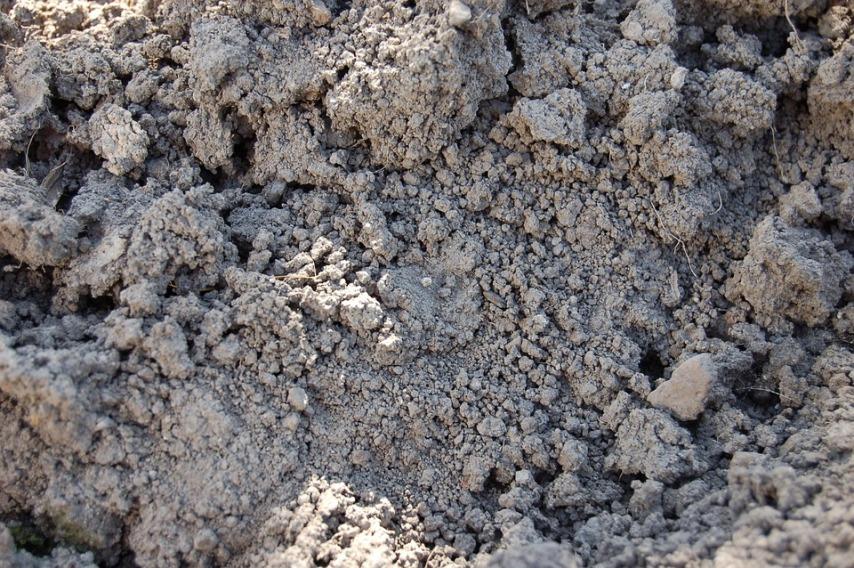 Как правильно подготовить землю для посадки чеснока осенью