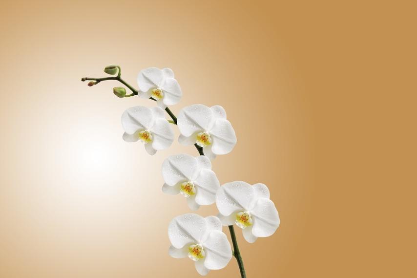 Правильный уходи и содержание орхидей