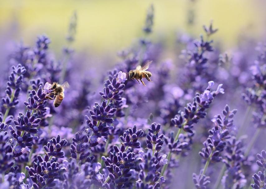 Особенности подготовки ульев и пчел к зиме
