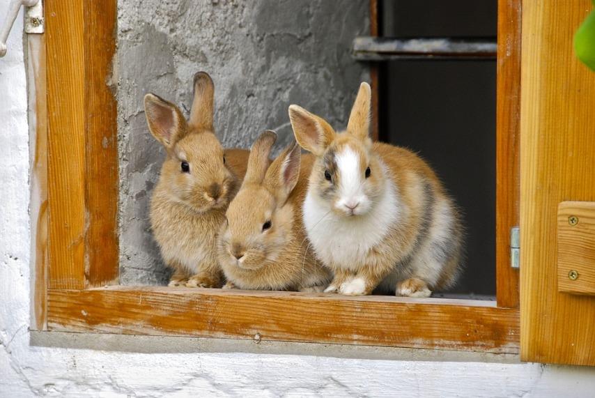 Основные требования к клетке для кроликов