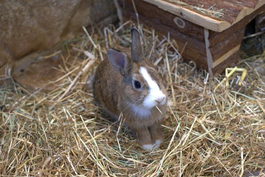 Важность сбалансированного рациона для кроликов