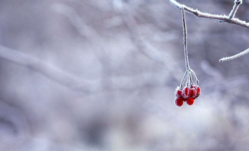 Зима и подготовка к ней в саду и огороде