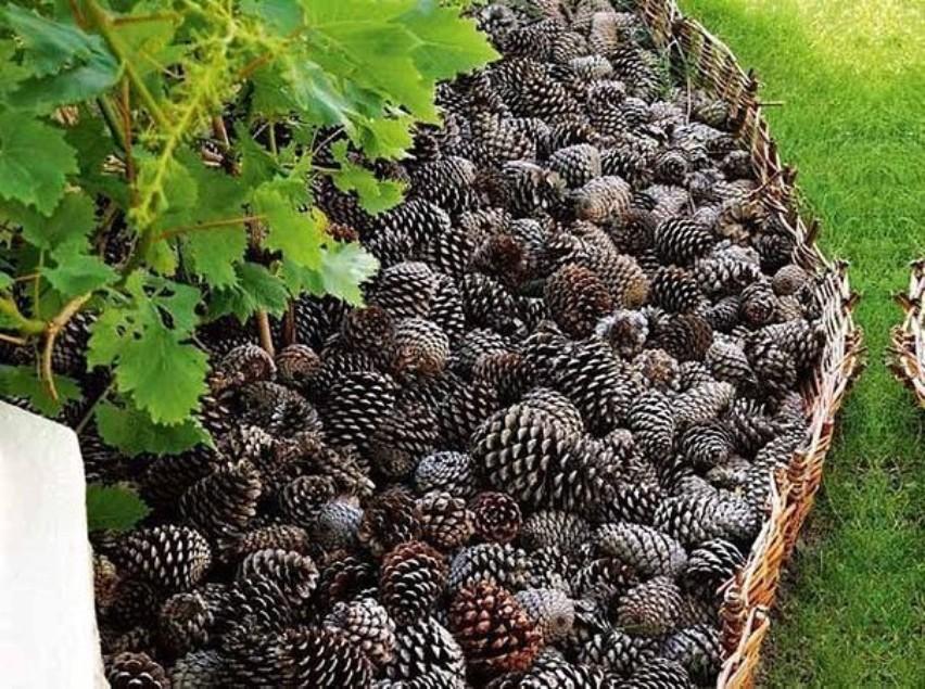 Сосновые шишки: создаем экологичную мульчу