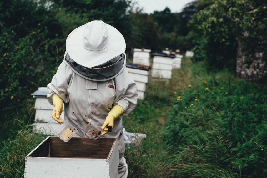 Как располагаются пчелы в зимовнике