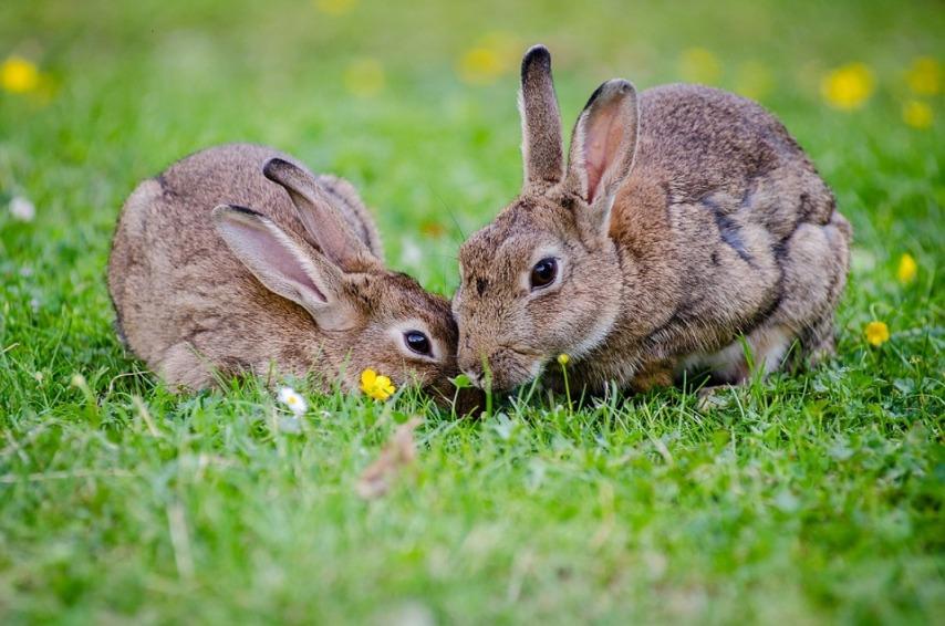 Критерии выбора породы кролика