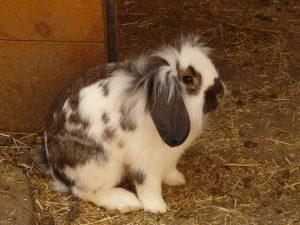 Разведение кроликов: действительно ли это так просто?