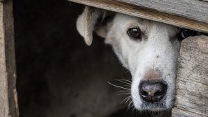 «Правильная» собачья будка на зиму