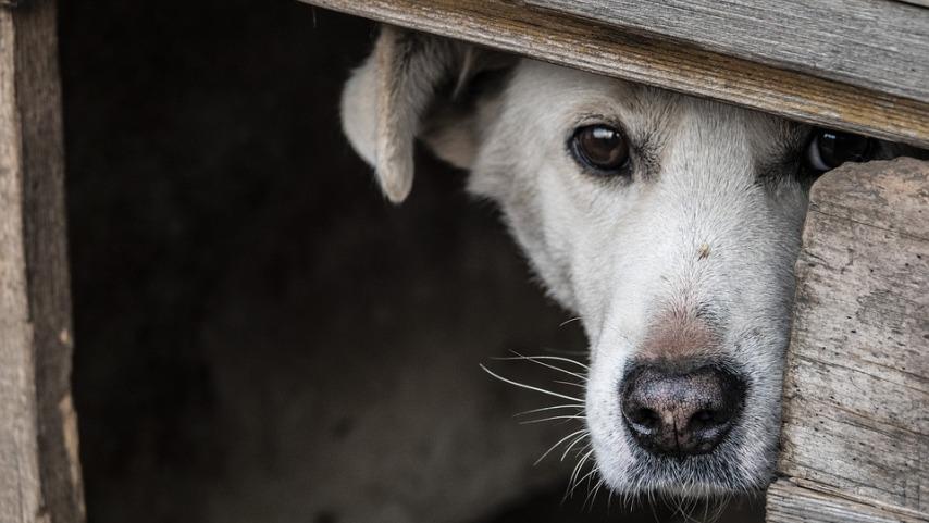 """Что такое """"правильная"""" собачья будка"""