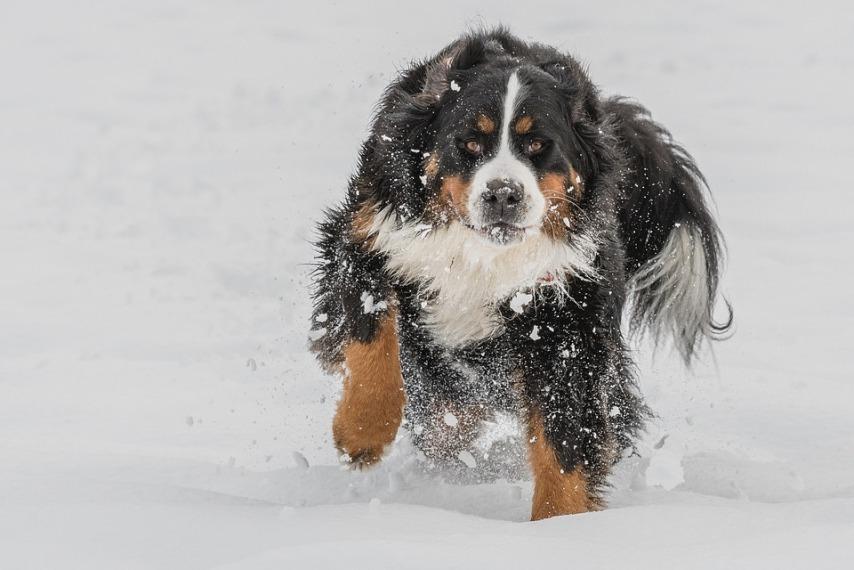 Уход за лапами собак зимой