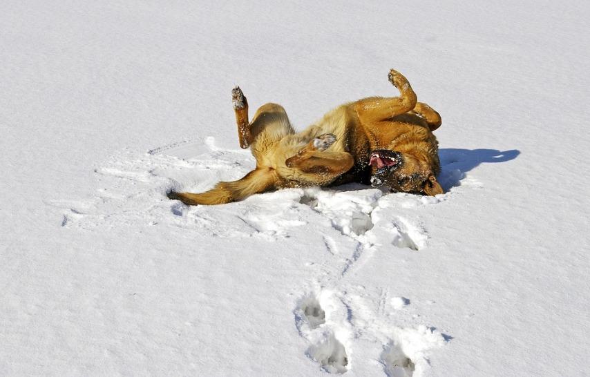 Что надо знать владельцам собак, которые проживают на улице